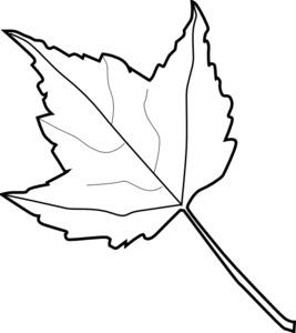 267x300 Drawn Maple Leaf Fall Leaves