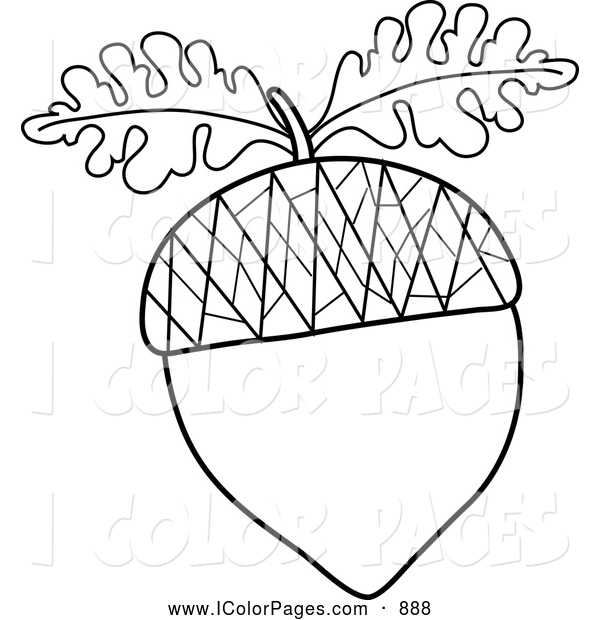 Collection Of Acorn Clipart