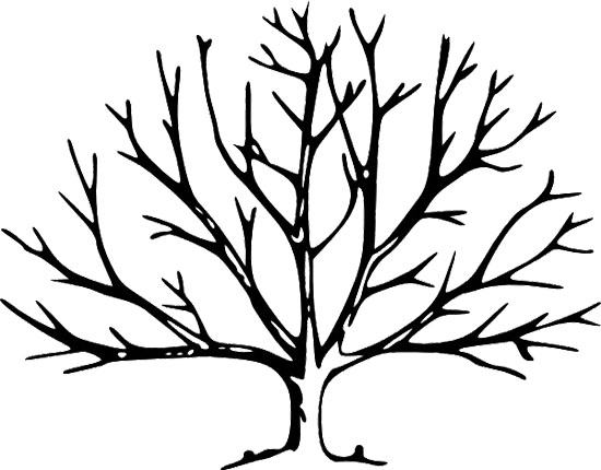 550x430 Fall Tree Without Leaves Coloring Page