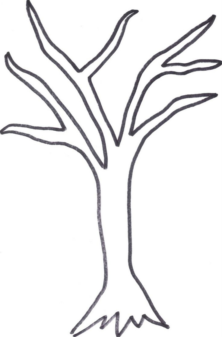 736x1117 Tree Trunk Leafless Tree Clipart Clipground