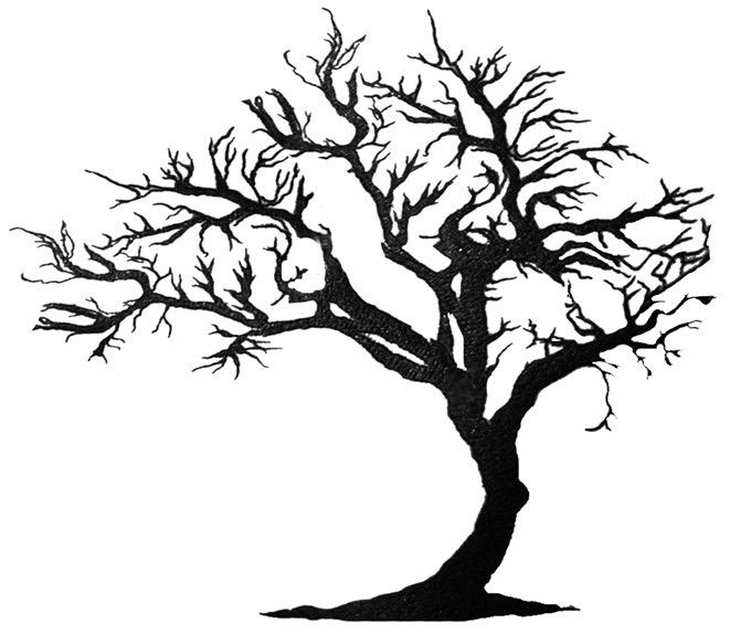 Leafless Tree Outline   Free download best Leafless Tree