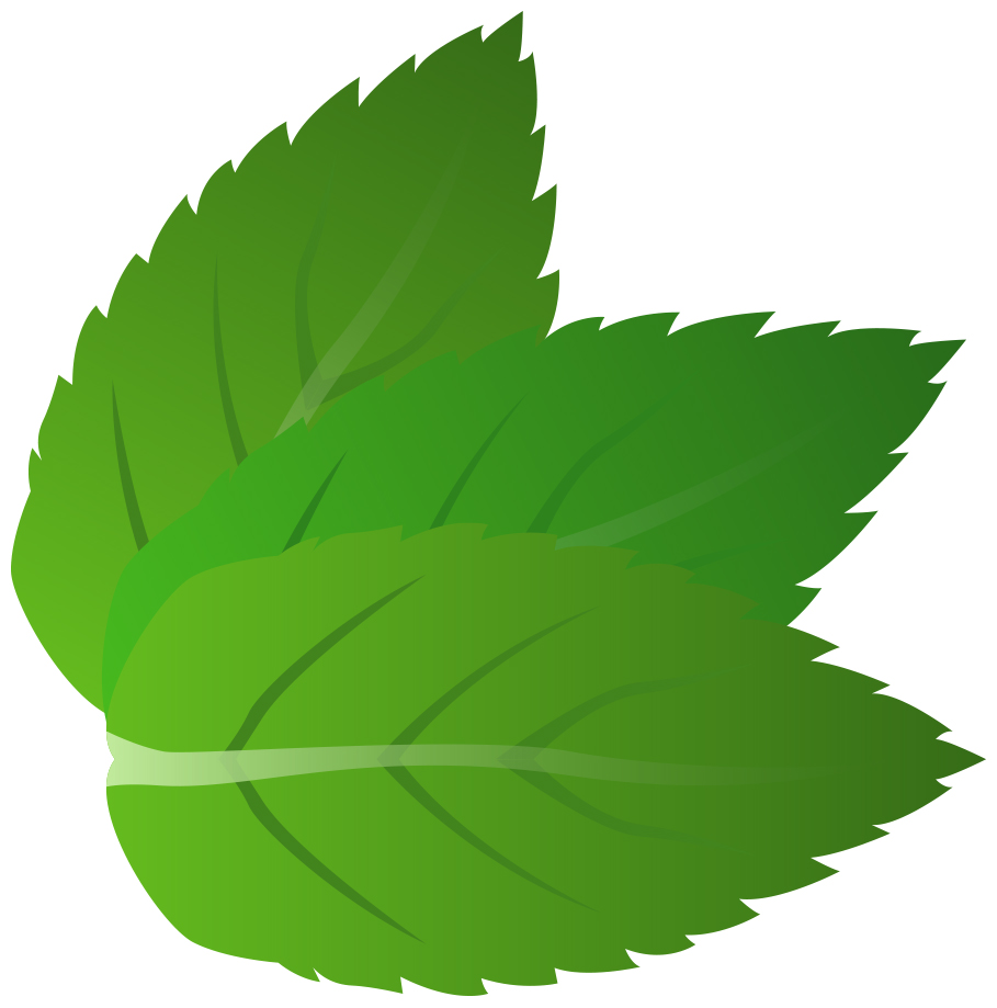 909x919 Leaves Mint Leaf Clipart