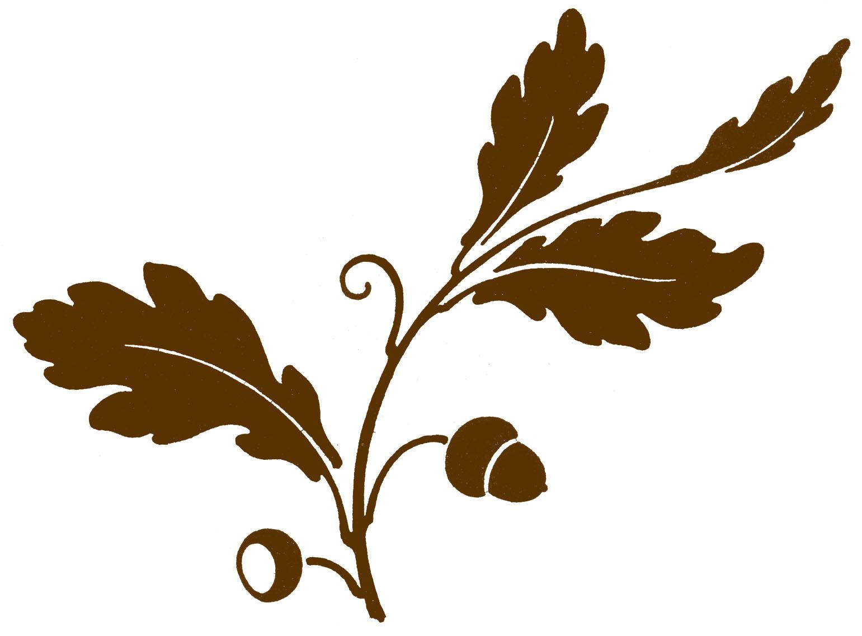 1541x1137 Oak Leaves And Acorns Clipart