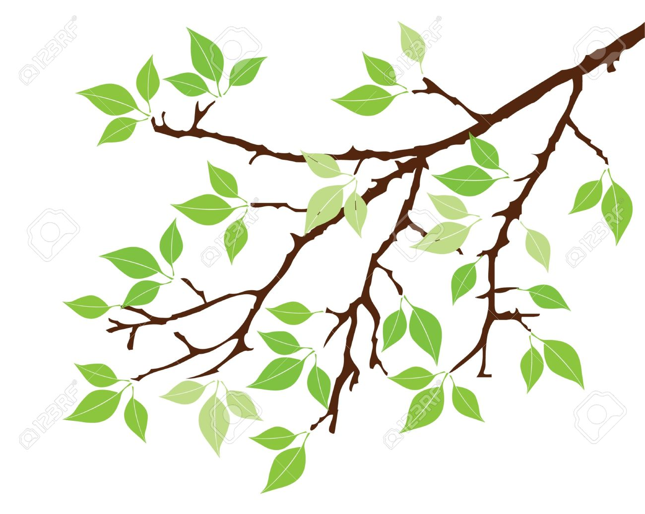 1300x1036 Vector Tree Branch With Leaves Royalty Free Cliparts, Vectors,
