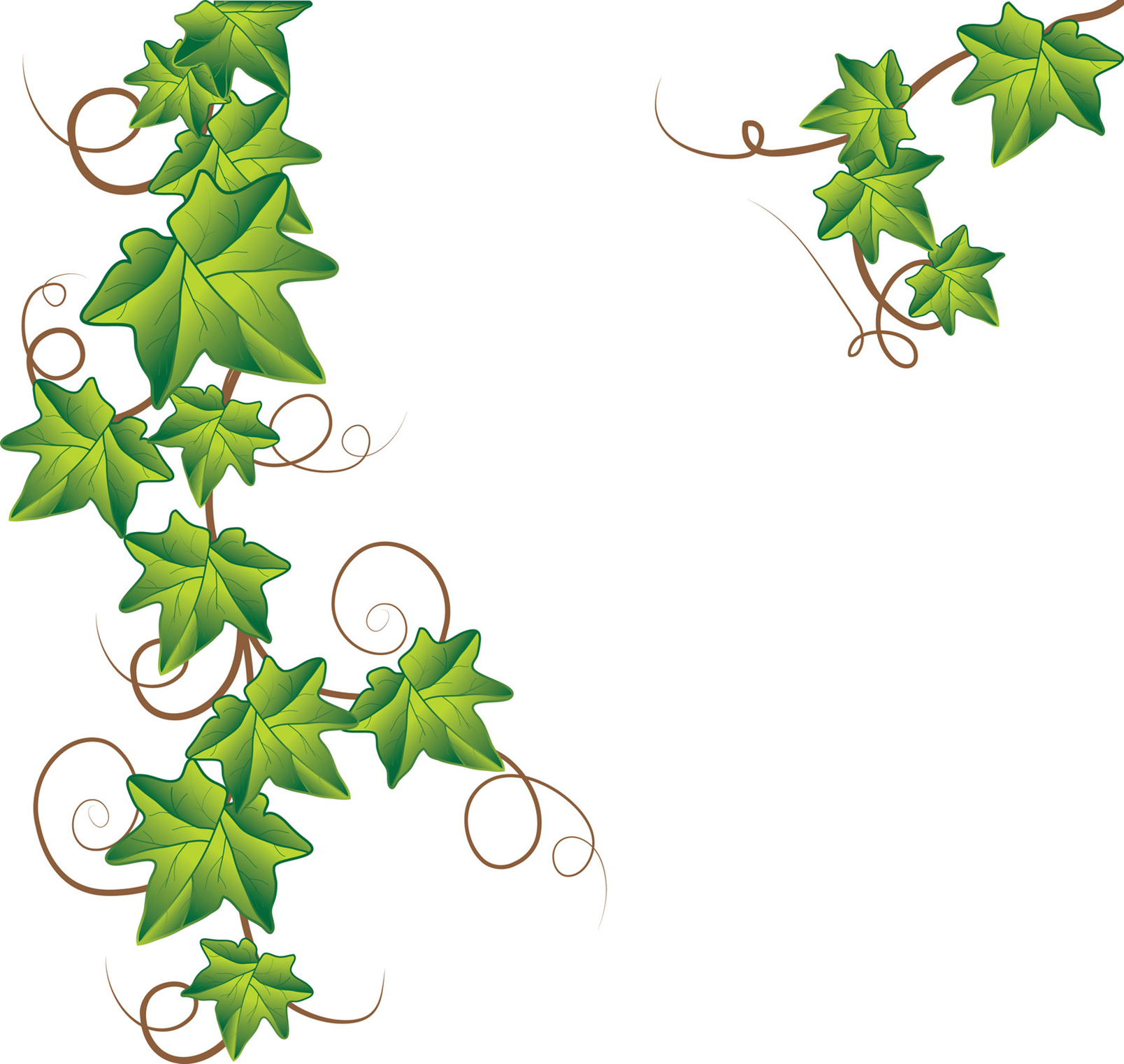 1608x1522 Jungle Vine Border Clipart