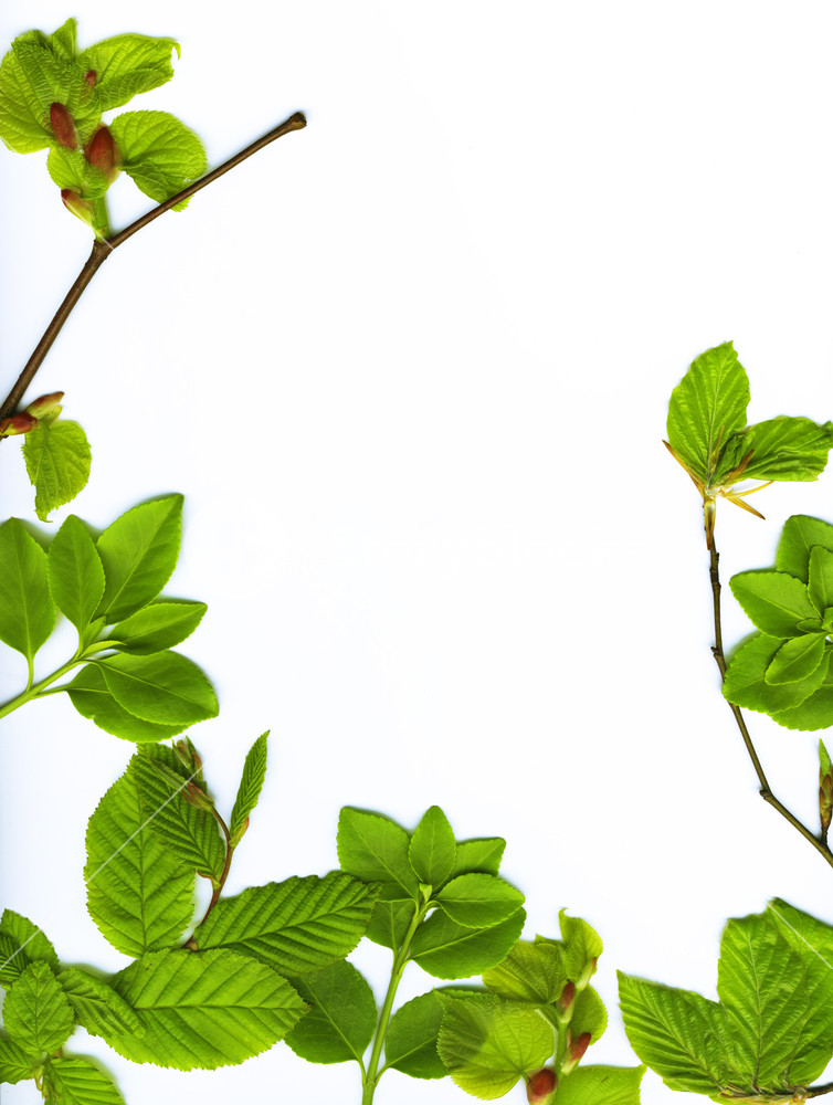 754x1000 Spring Leaves Border Over White Background Royalty Free Stock