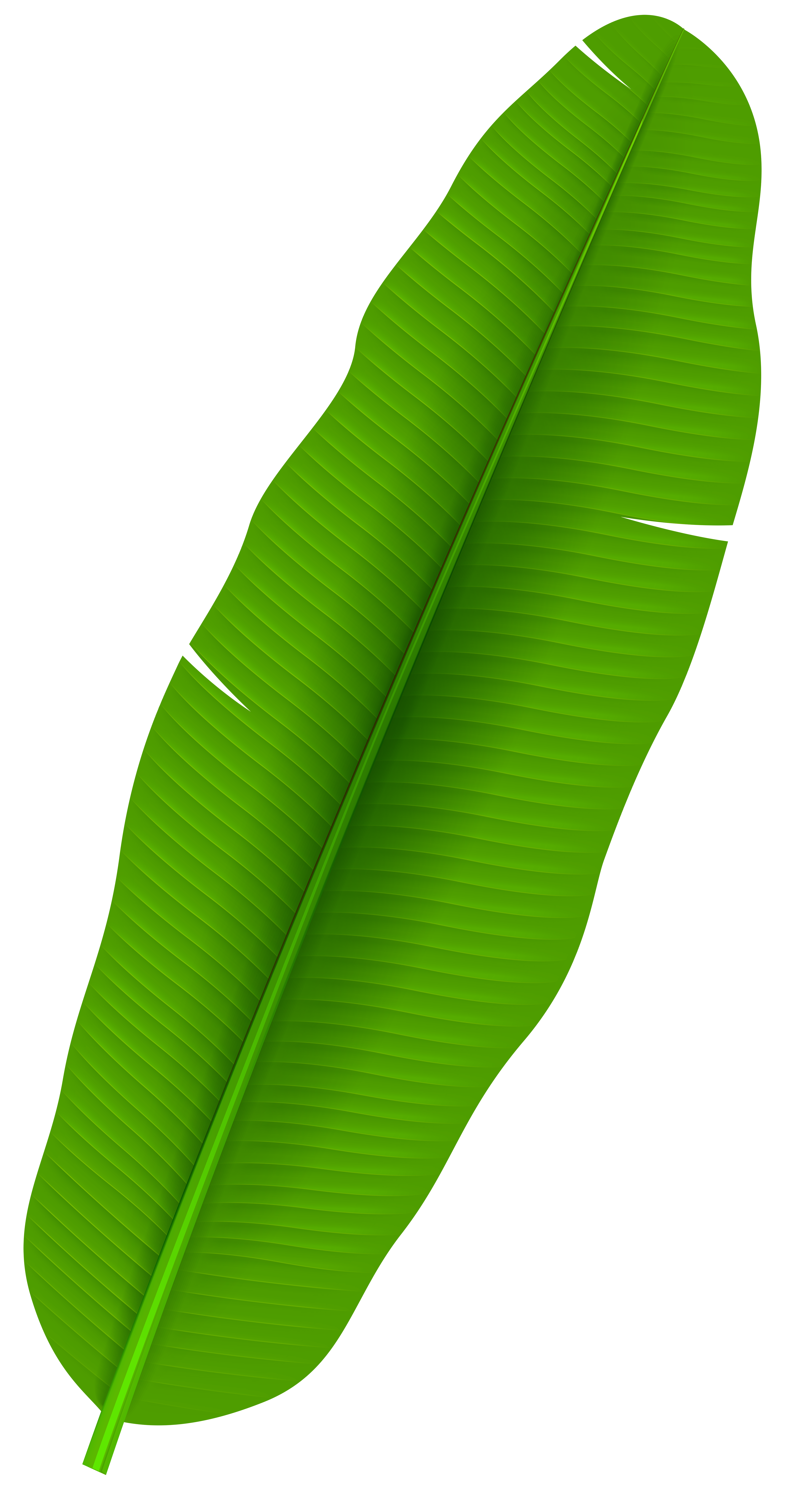 4363x8000 Palm Leaves Clip Art Easter Cliparts