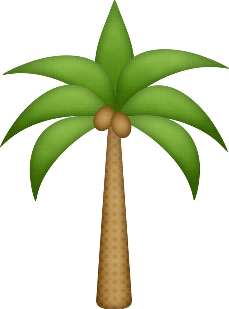 736x991 Best Palm Tree Clip Art Ideas Palm Tree Images