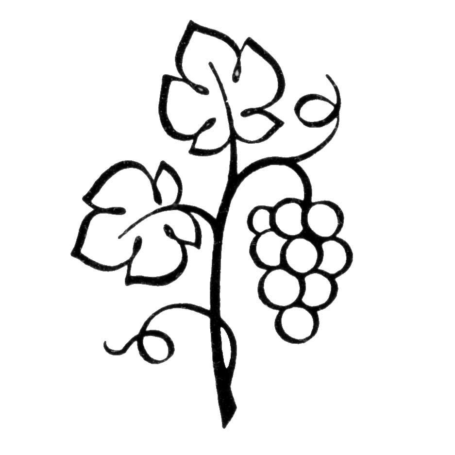 937x937 Free Vine Clip Art Pictures