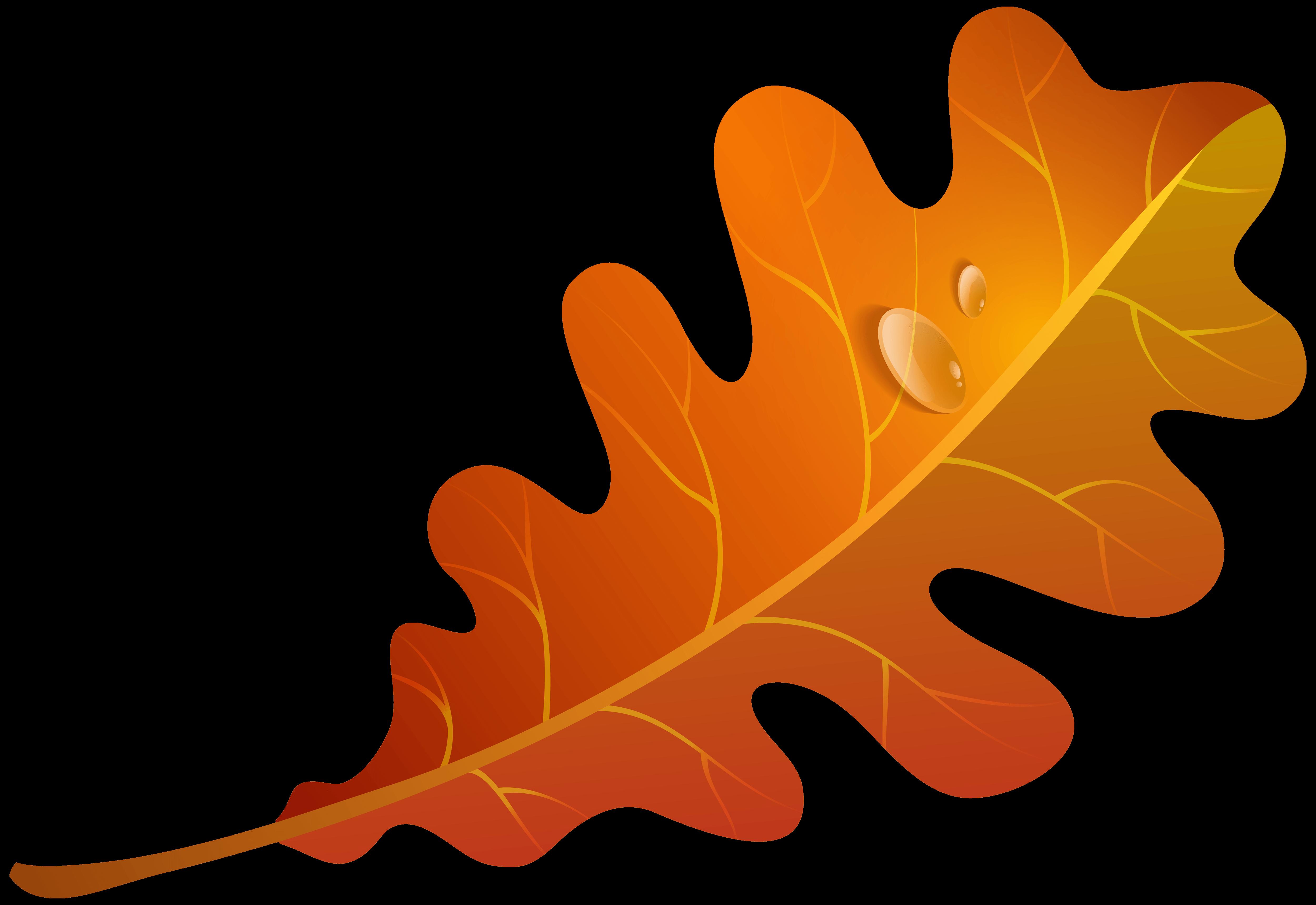 5000x3439 Orange Leaves Cliparts