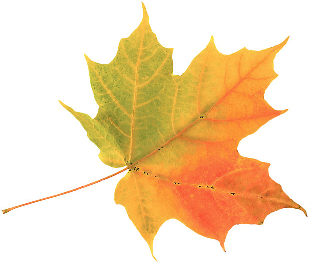619x528 September Leaves Clipart