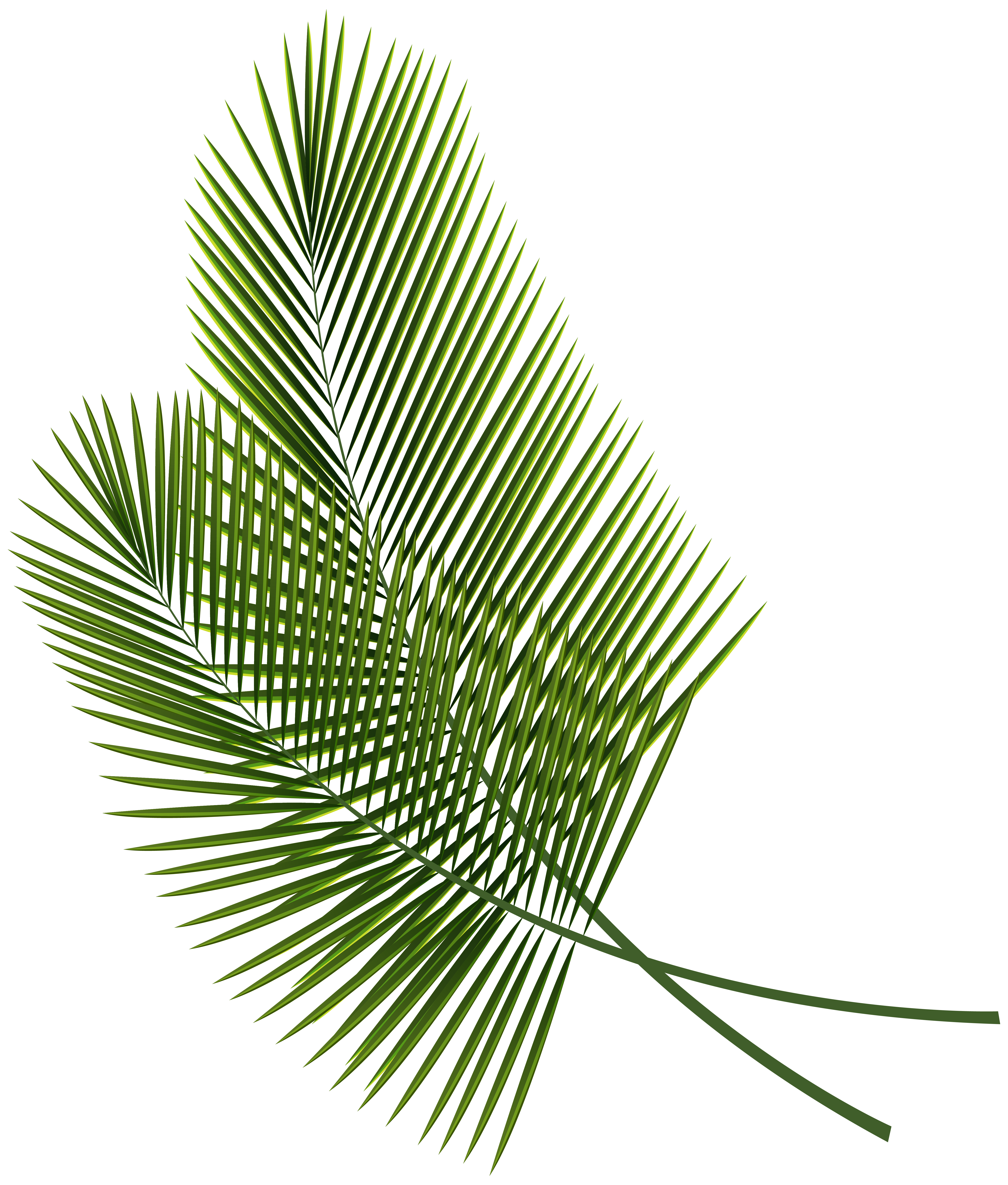 5295x6226 Tropical Leaves Clipart
