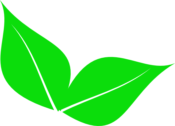 600x431 Two Leaves Clipart