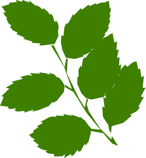 552x598 Green Leaves Clipart