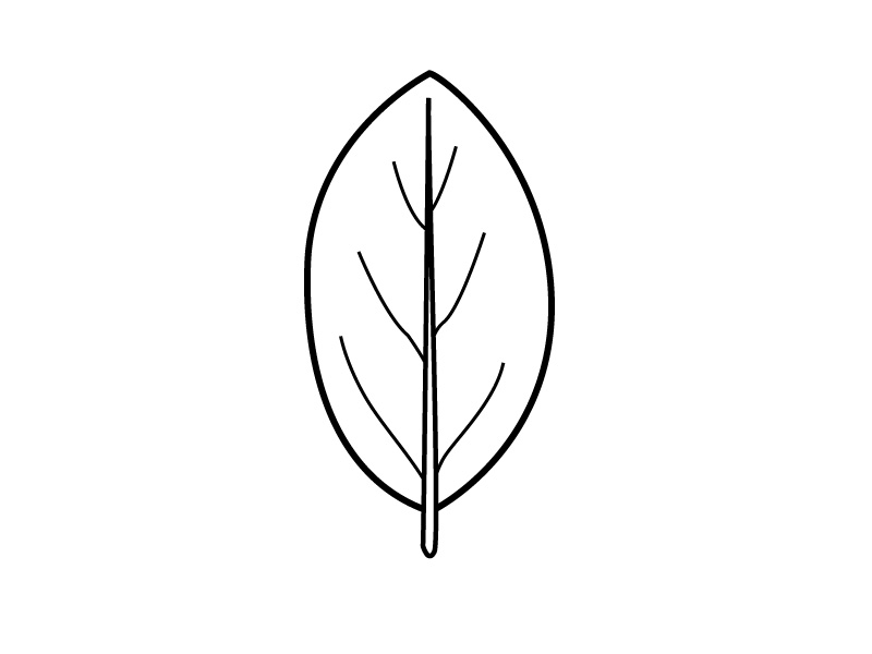 800x600 Ivy Clipart Leaves Outline
