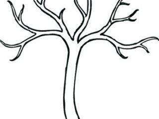 320x240 Outline Of A Tree Without Leaves Of A Tree Without Leaves Crayola
