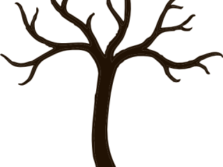 320x240 Outline Of Tree Without Leaves Tree Without Branches Clip Art
