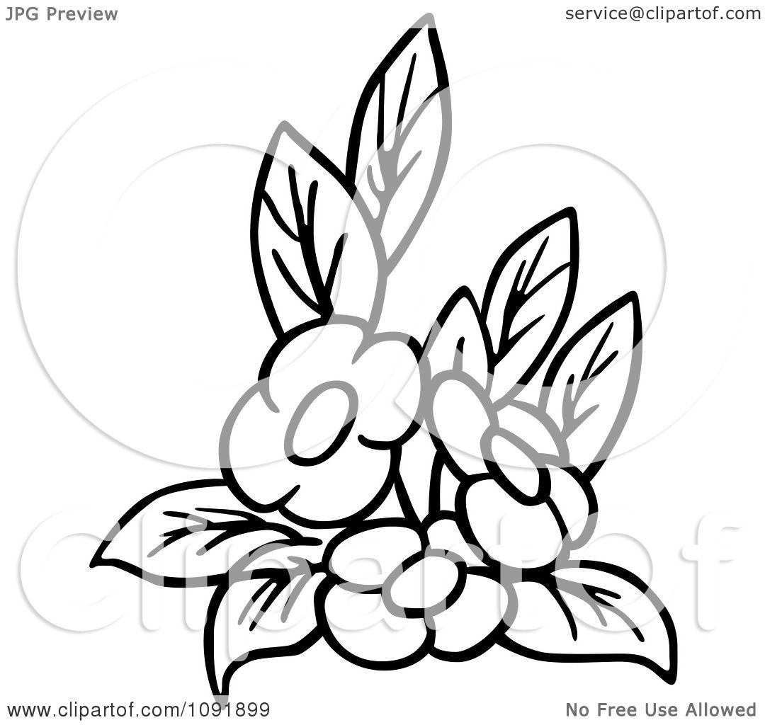 1080x1024 Clipart Outline Of Three Flowers And Leaves