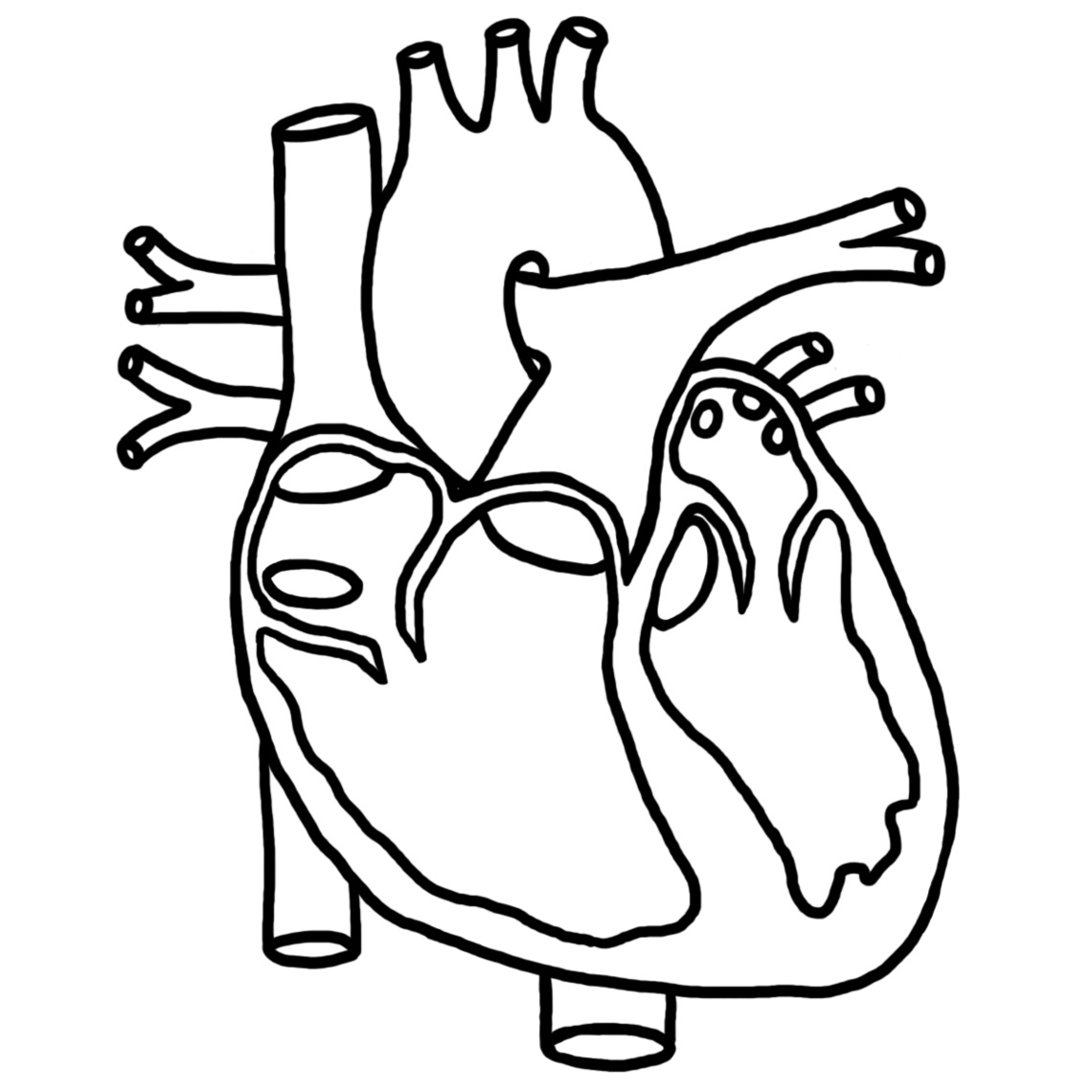 1140x1140 Human Heart Clipart Black And White Letters Example