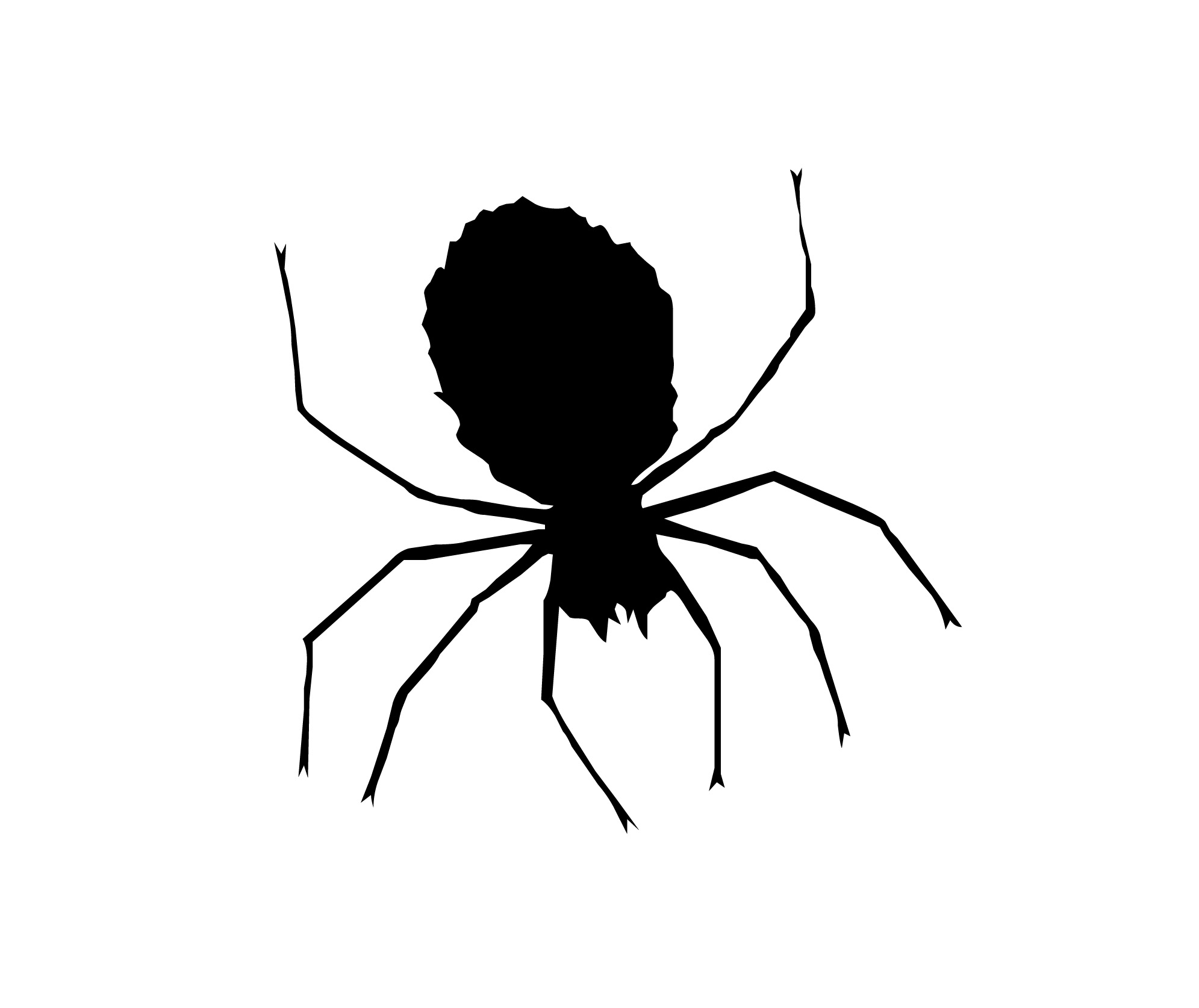 1991x1674 Spider Black And White Black And White Spider Clipart 4