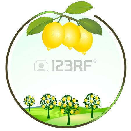 450x450 67,588 Lemon Cliparts, Stock Vector And Royalty Free Lemon