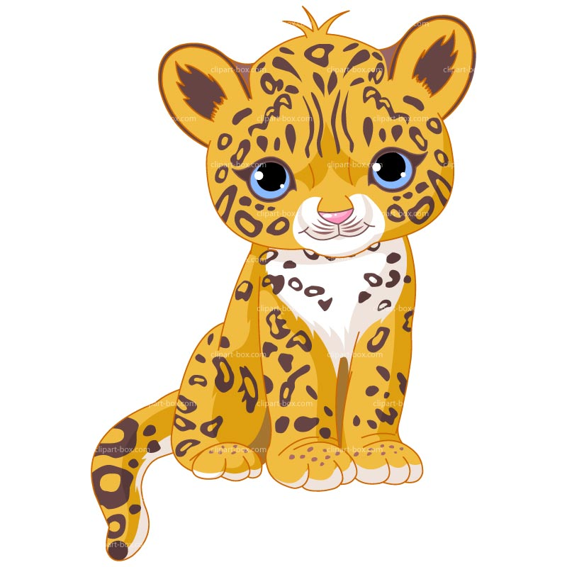 800x800 Baby Leopard Clipart