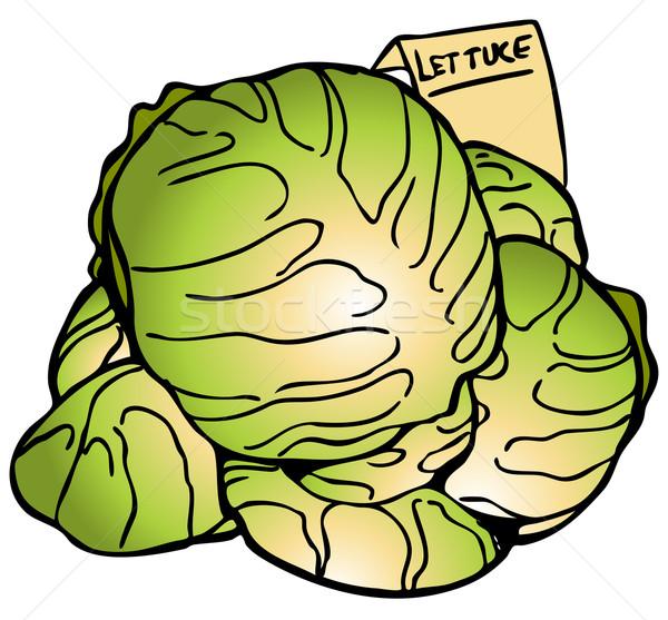600x557 Lettuce Stock Vectors, Illustrations And Cliparts Stockfresh