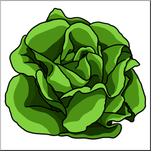 Lettuce Clipart | Free download on ClipArtMag