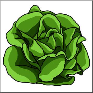 Lettuce Clipart | Free...