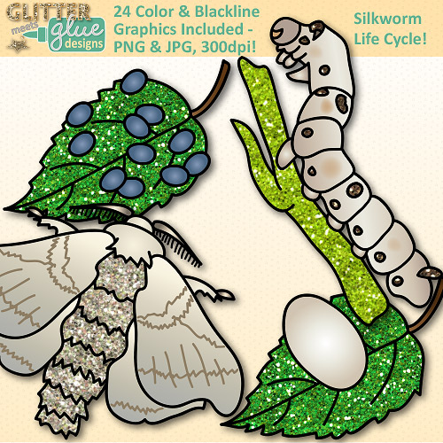 500x500 Silkworm Life Cycle Clip Art {Great For Animal Groups, Insect