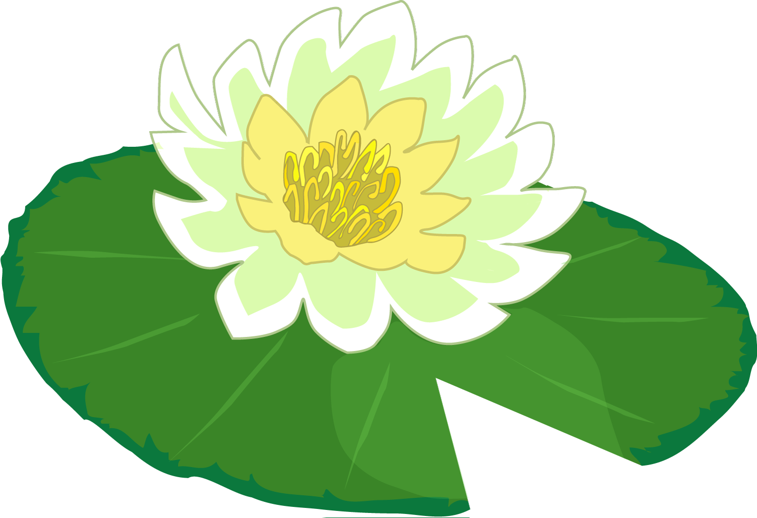 1501x1027 Water Lily Clipart Lily Pad