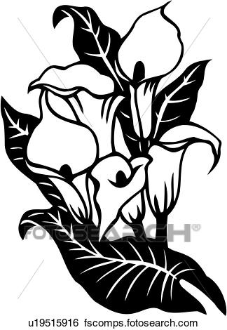 324x470 Clip Art Of , Cala Lily, Calla, Flower, Lily, Varieties, U19515916