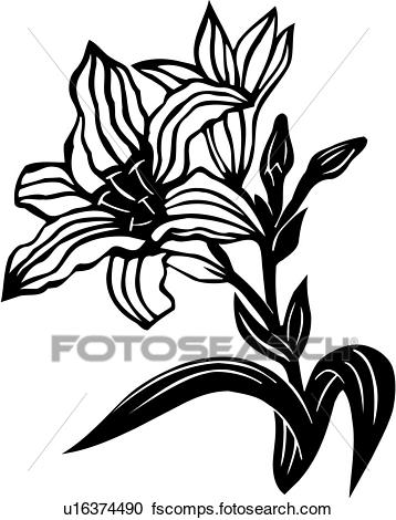358x470 Clipart Of , Flower, Lily, Varieties, U16374490