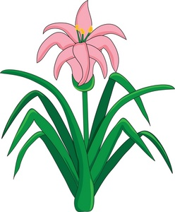 248x300 Easter Lily Clipart Image