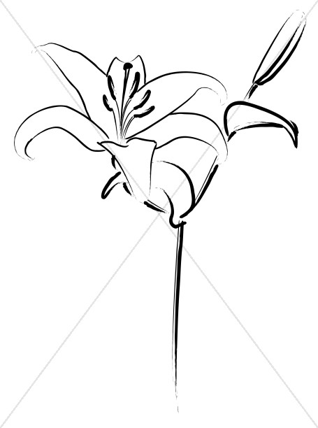 455x612 Easter Lily Line Art Easter Clipart