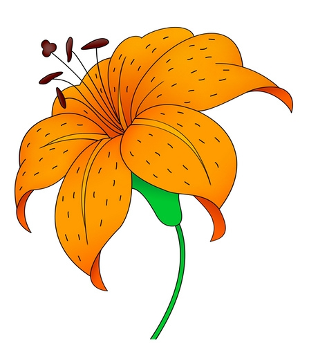 460x500 Lily Clipart Tiger Lily