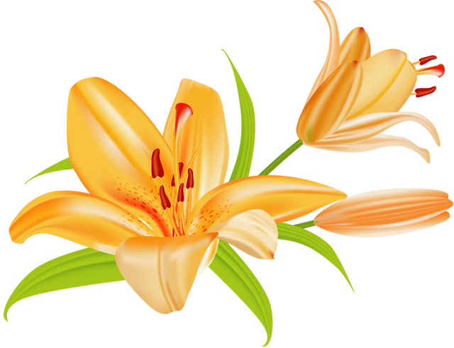640x491 Lily Image Clip Art Lilies Flowers 3 Image