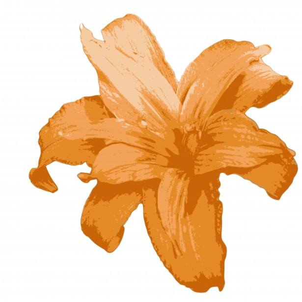 615x615 Orange Lily Flower Clipart Free Stock Photo Public Domain Pictures