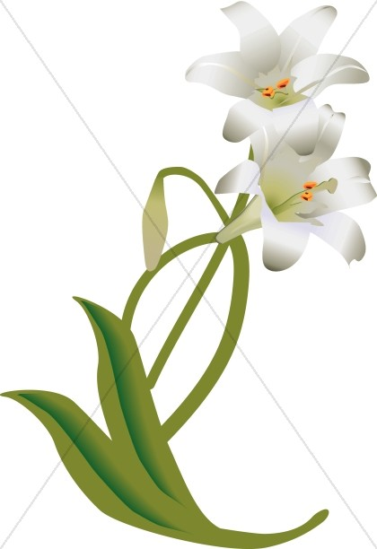 420x612 White Flower Clipart Lilly