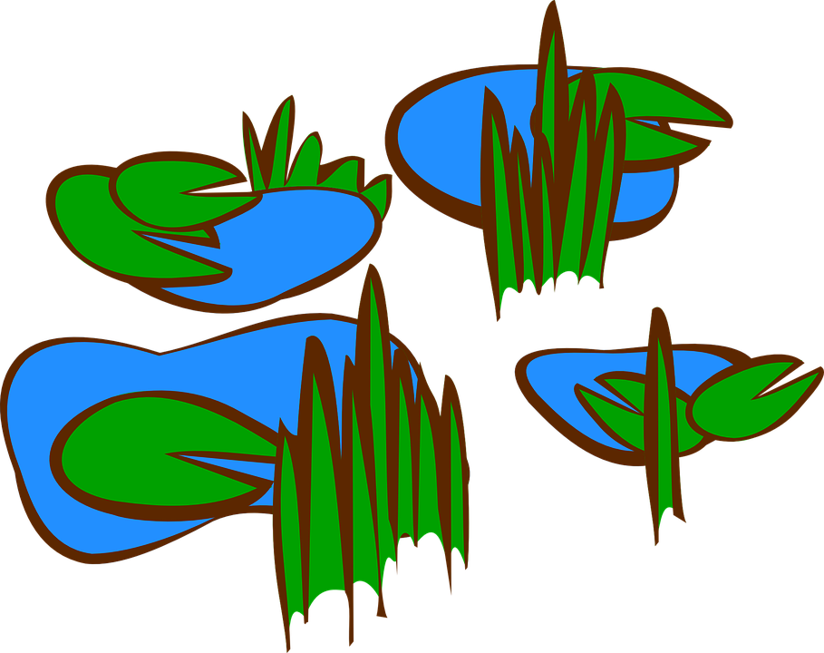 909x720 Lily Pad Clipart Pond Plant