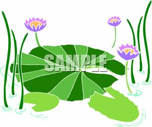 300x251 Purple Water Lilies Clipart