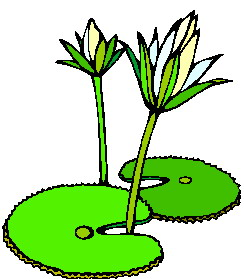 244x279 Lily Pad Flower Clipart 2 Image