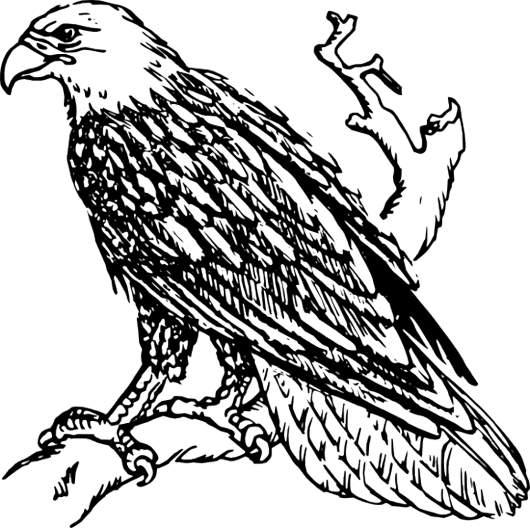 530x528 Black Eagle Clipart Line Art