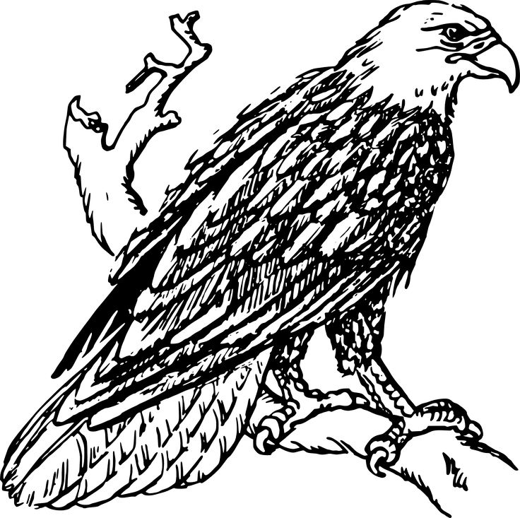 736x733 35 Best Eagle Images Gifs, Interest Rates And Wings