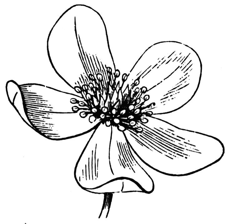 Line Drawing Of A Flower