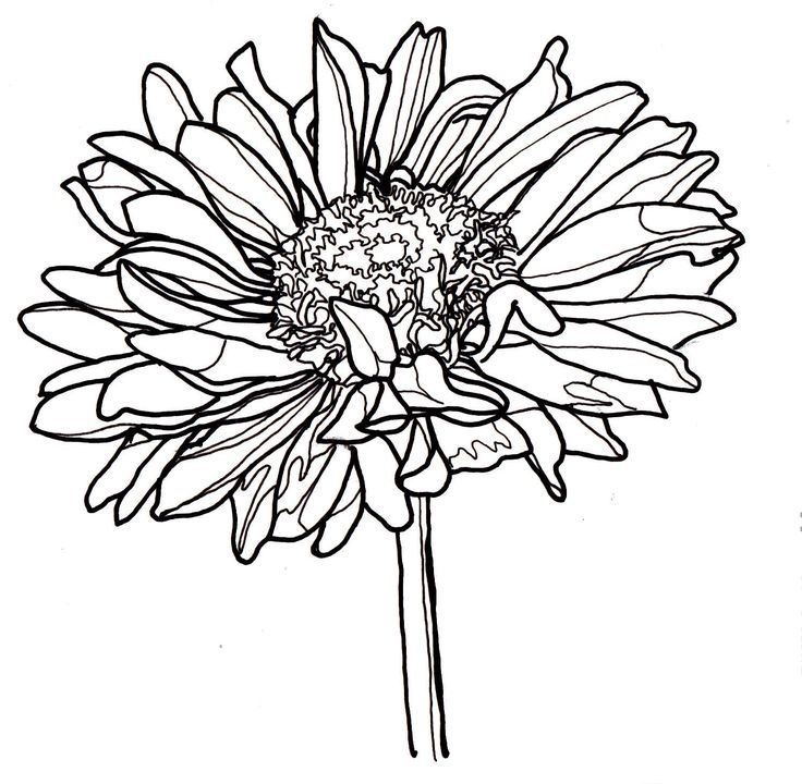 Free Line Art Drawings Flowers : Line drawing of a flower free download best