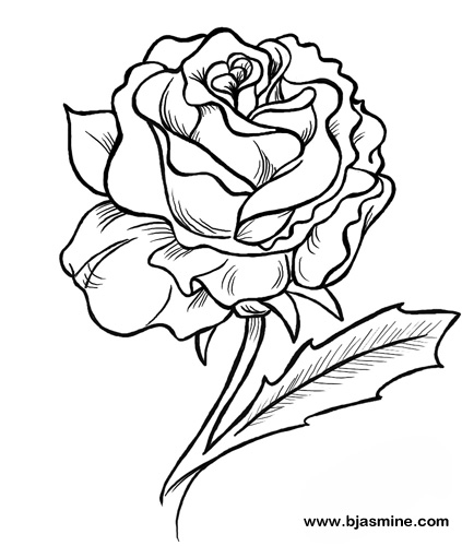 423x500 Line Drawing Of Rose. Rose Sketch With Pen. How To Draw A Rose