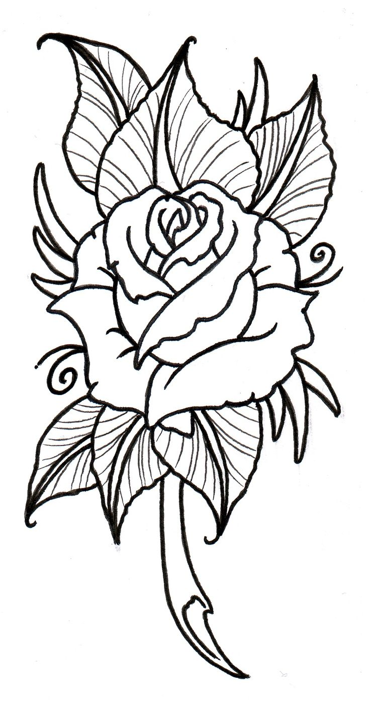Line Drawing Of A Rose Free Download Best Line Drawing Of A Rose