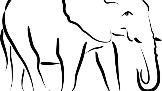 570x320 Out Line Drawing Animals Outline Animals Cute With Images