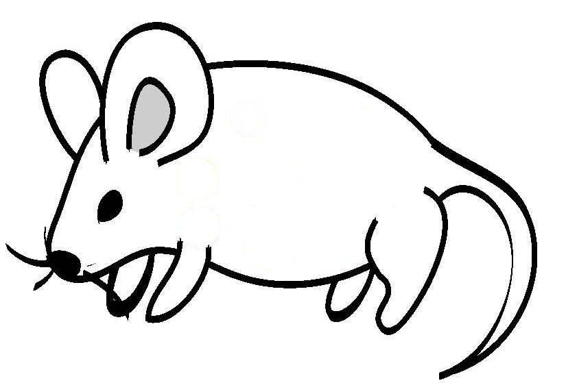825x559 Line Drawing Of Animals